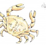 Boutique-Crab